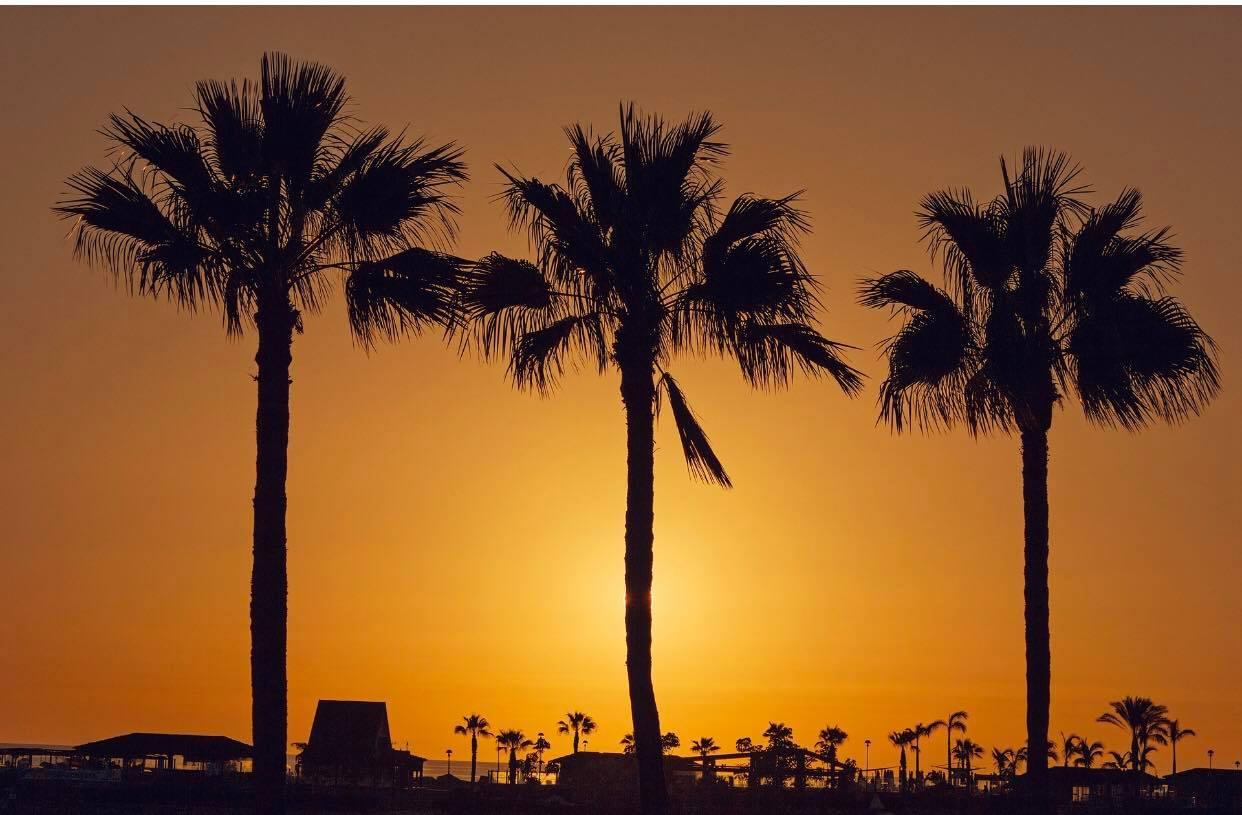 palm trees bahia feliz