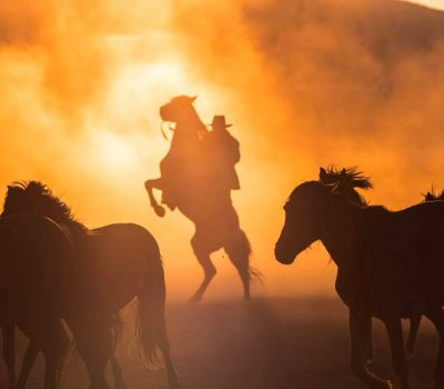 horses sioux city playa del inlges